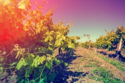 Photo for: Heat wave strikes France – Meddles with Wine