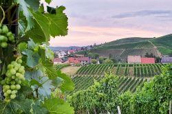 Photo for: CHAMPAGNE: Grandes maisons, grandes personnalités, vinification unique